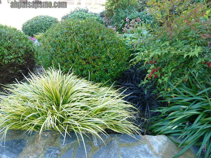 Gramineas ornamentales 709 532 arbustos para jard n - Arbustos para jardin ...