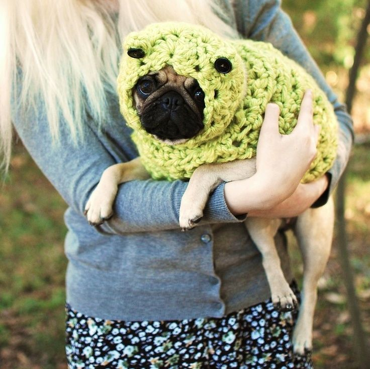 Crocheting Gone Wrong : Crocheting gone bad. Fun with pugs Pinterest