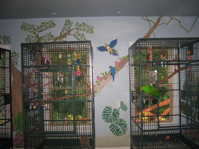 My dream bird room for my birds gardening that i love for Birdcage bedroom ideas