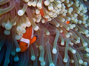 Abound on the earth many examples of which are easily seen on coral