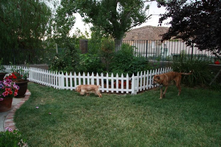 Garden fencing ideas to keep dogs out photograph tophers w