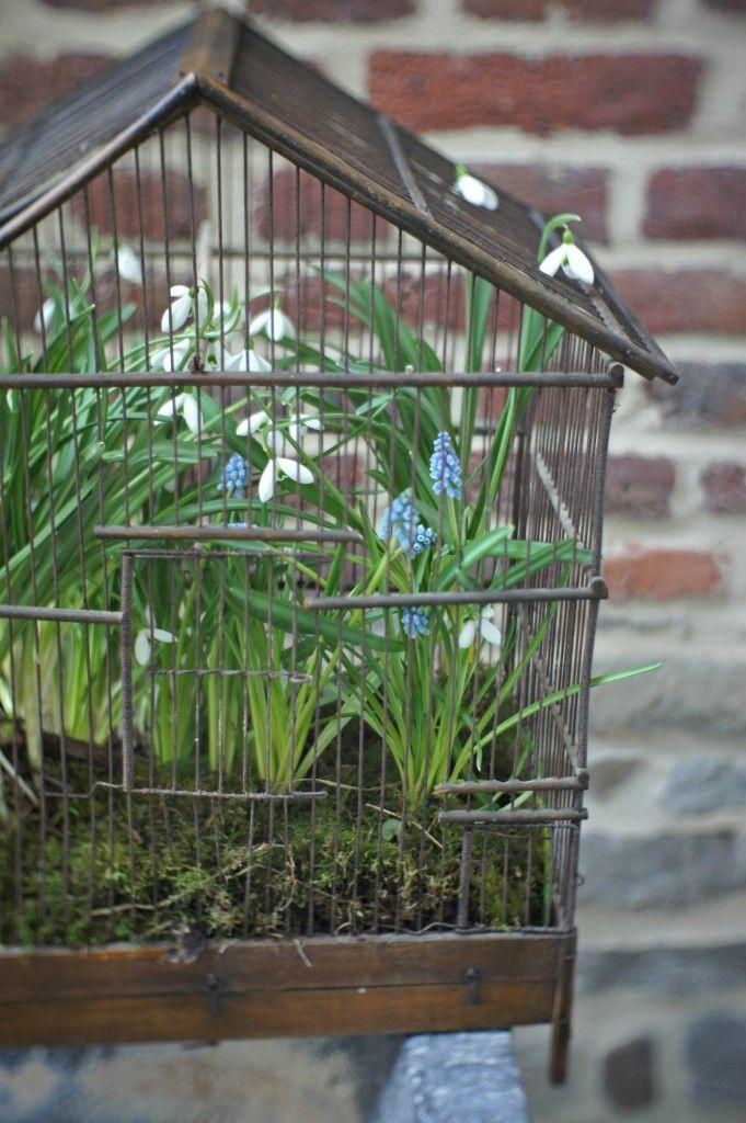 Bird cage garden birdcages decor design and upcycling for Garden cage