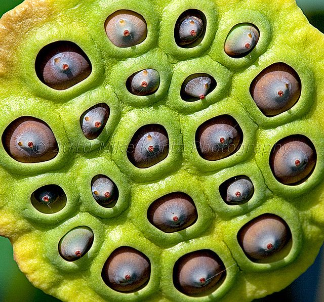 trypophobia skin disease images amp pictures becuo MEMES