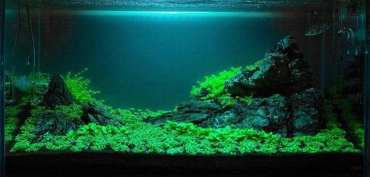 iwagumi Aquascaping Inspiration Pinterest