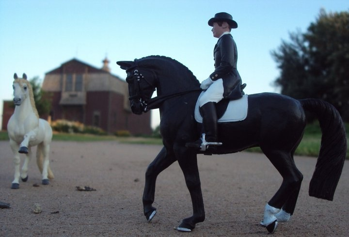 Prancing Andalusians and James on Dancing Bells in dressage shows how really regal our Winner's Circle horses truly are.