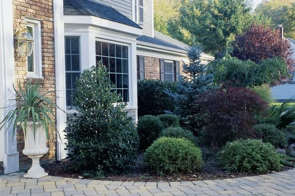 Landscaping Around A Home : How to landscape around a house with plants shrubs