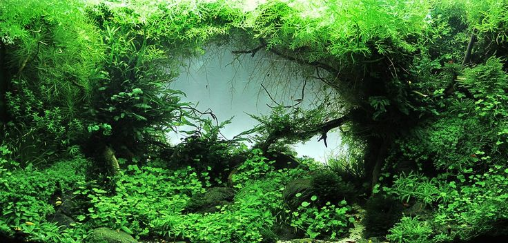 Framed Freshwater Aquascape Give The Green Light. (Color) Pintere ...