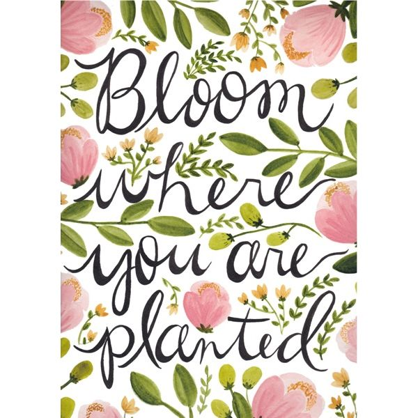 bloom where you are planted — the painted arrow