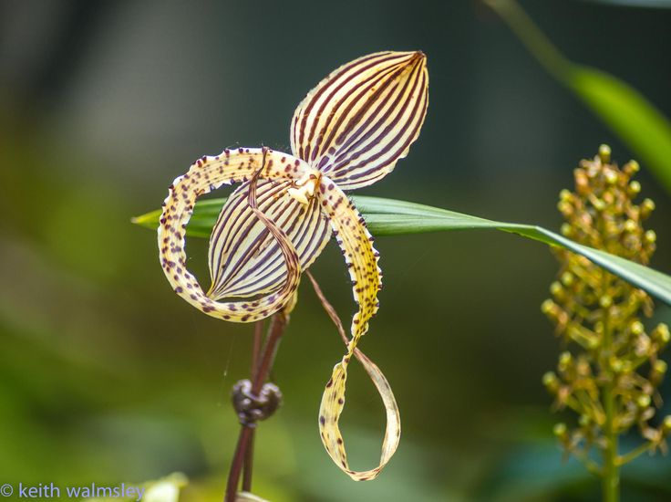 Octopus Orchid | Beauty | Pinterest: pinterest.com/pin/545005992379455260