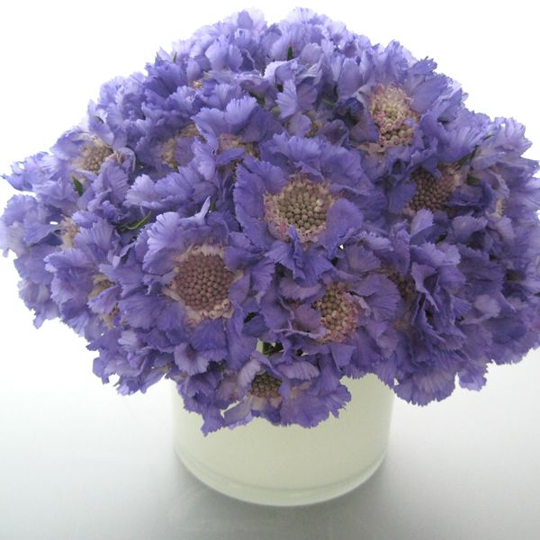 Wedding Flowers In Season In March : March flowers in season related keywords suggestions