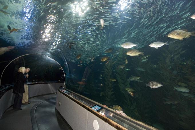 Aquarium Of The Bay San Francisco Pinterest