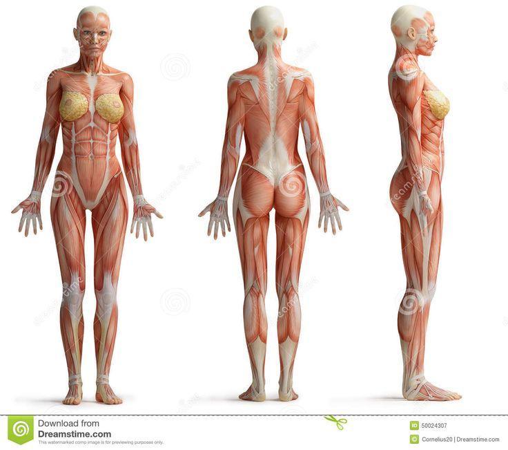 Female Human Body Diagram Crazywidowfo