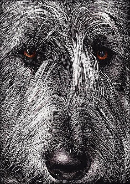 L'Irish Wolfhound 89f50b1aebe043f9c87b9d30f68e4828