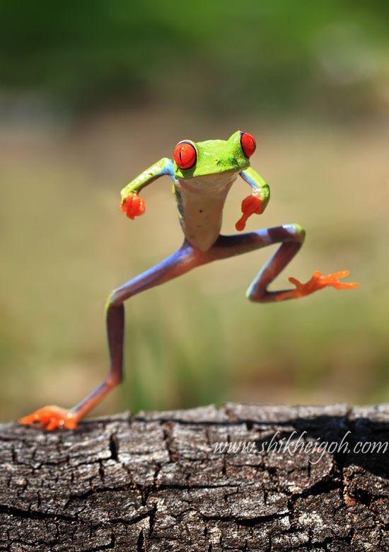 happy happy joy joy froggy