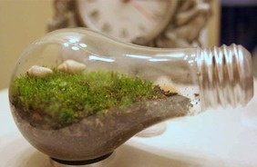 Stumble Make Your Own Gifts LIGHT BULB TERRARIUM – Green Holiday Gift Guide