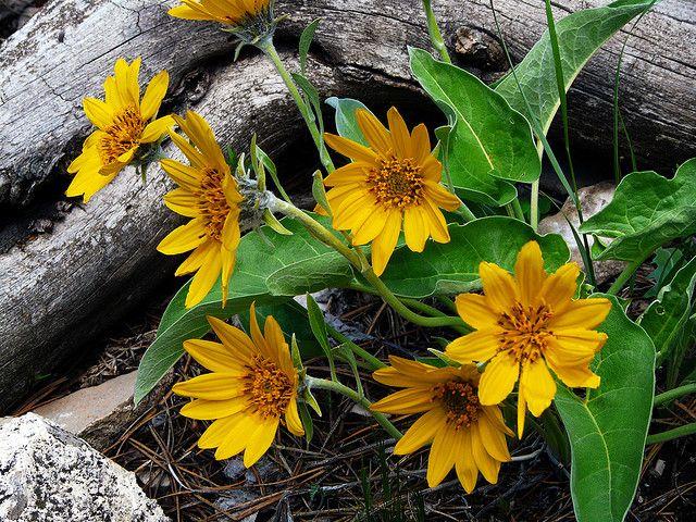 flowers quizlet