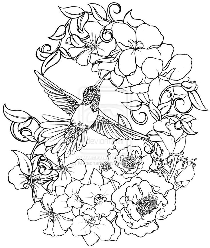 Flower Color Pages Advanced Hummingbird With Flowers