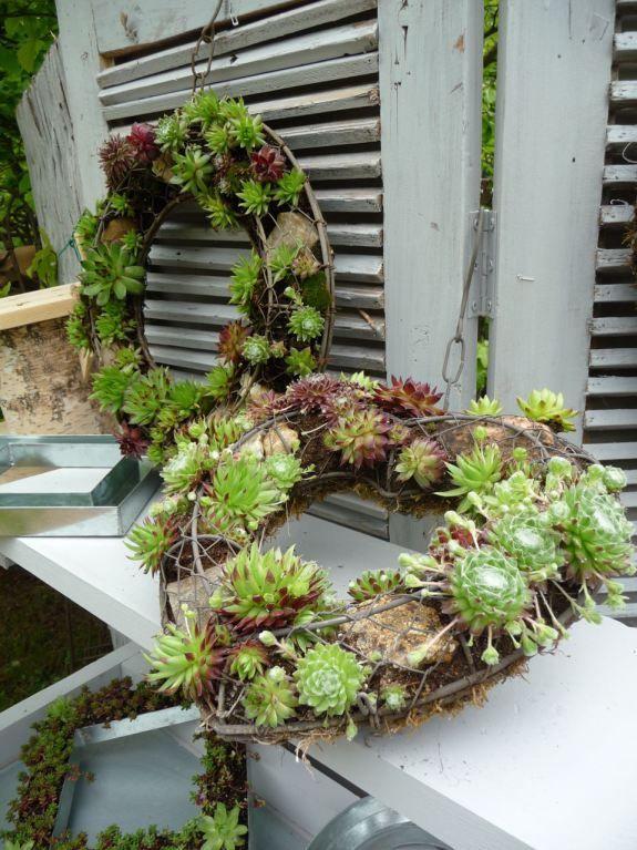 Plantes succulentes  Jardin  Pinterest