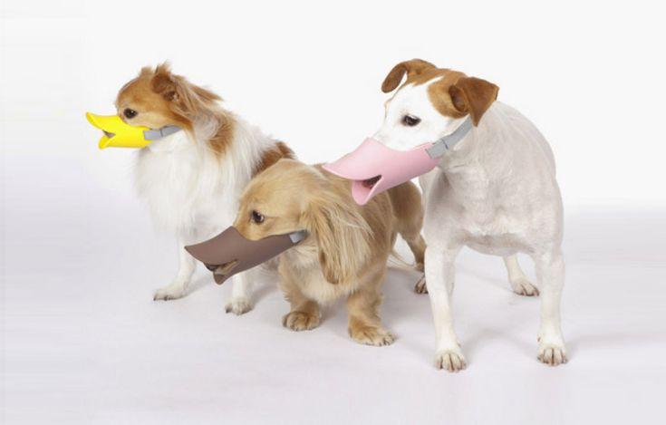 Curiosos bozales para perros con forma de pico de pato. Duck-bill dog muzzles by oppo