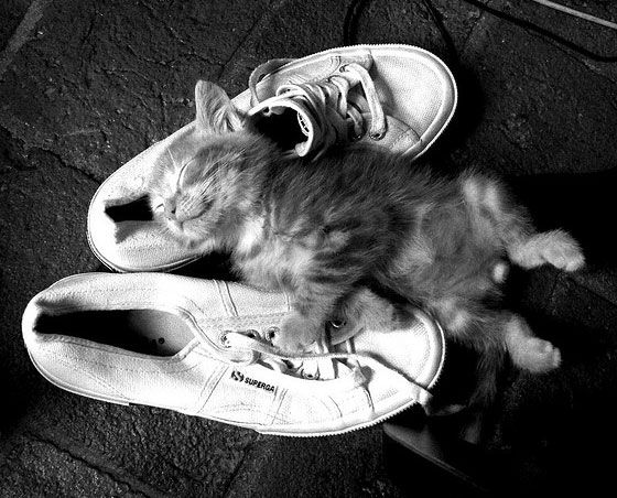 *Kitty loves mommy's sneakers