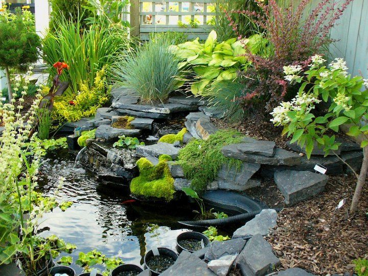 Pin by elizabeth mitchell on joy of gardening and for Plants to put in pond