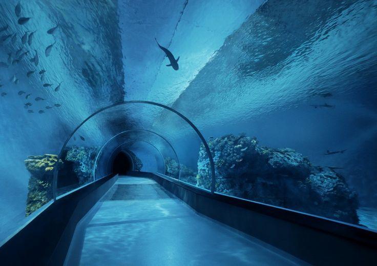 Public aquarium Led lighting Peces Marinos Pinterest