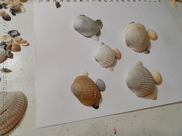 how to make sea shells safe for a fish tank