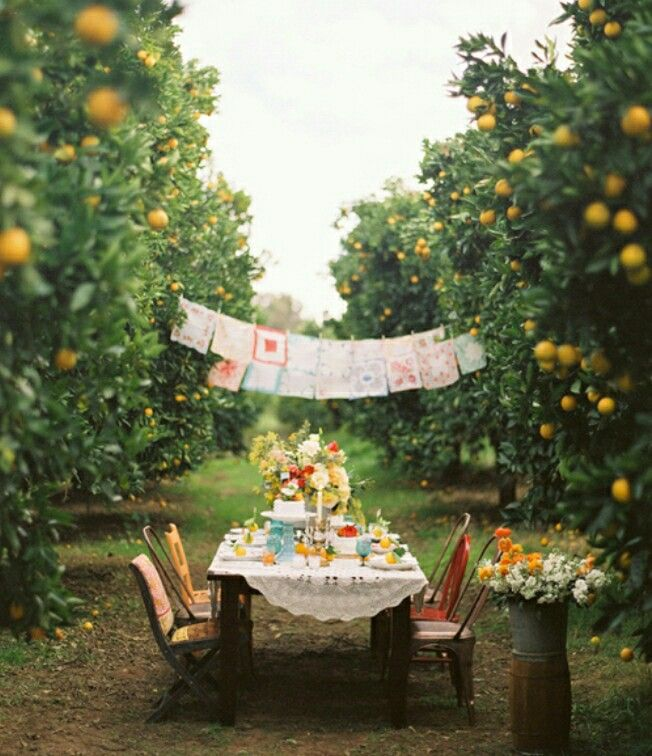 Outdoor dinner party viva la vido pinterest