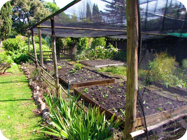 Enclosed veggie garden outside the house that hollie for Enclosed vegetable garden designs