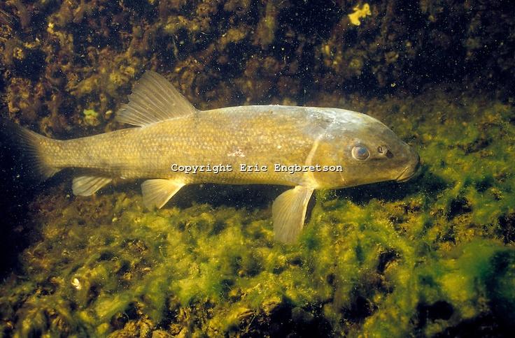 Underwater No1 Düsseldorf  Tauchausrüstung  PADI