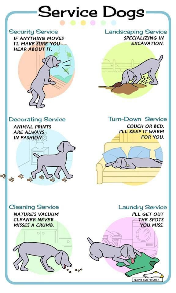 Types Of Therapy And Service Dogs