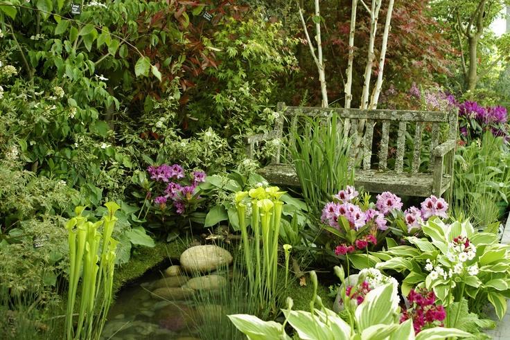 Beautiful pond plants ponds pinterest for Ornamental pond plants