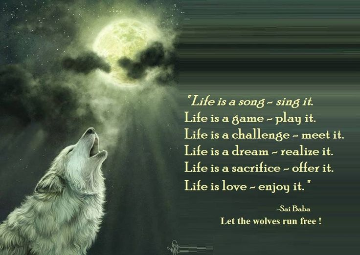 Let the wolves run free.The Dance at Alder Cove/|☽ ☾Youth ...