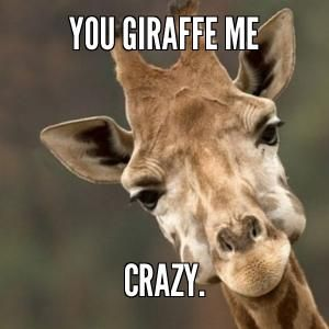 Giraffe meme coffee - photo#14