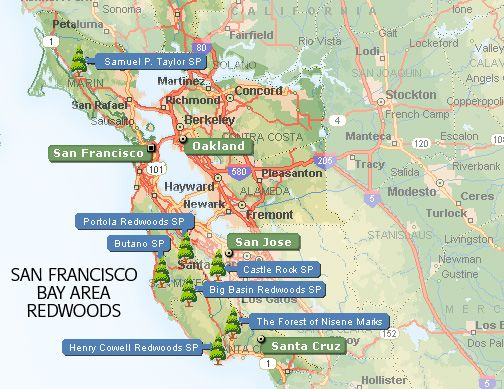 Bay area redwoods trip ideas travel bucket list for Bay area vacation ideas