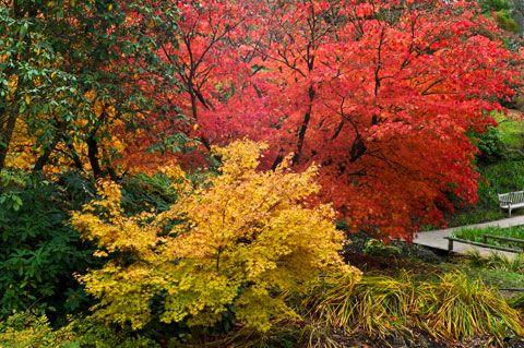 http://daviddixonphotography.co.uk/gardens/gallery.asp