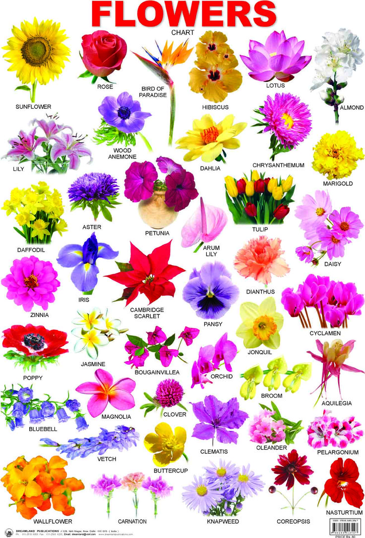 Names Of Spring Flowers With Pictures