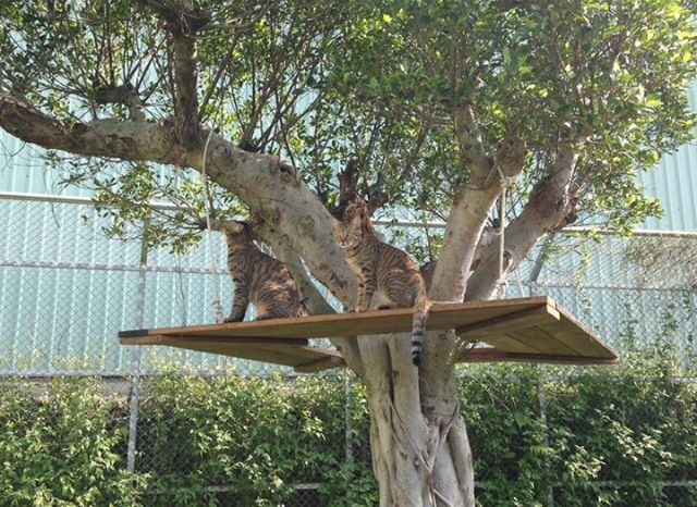 Outdoor Cat Tree House Cat tree house from catswall