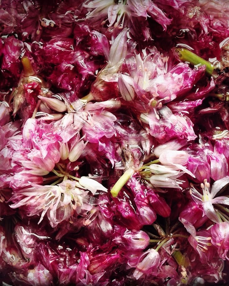 Chive Blossom Vinegar / photo by Hungry Ghost Food and Travel