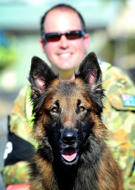 'Tank', a long-haired Belgian Malinois military working dog, and his handler LAC Tim Harcourt (Nelson Bay, NSW), who are both from 381 ECSS at RAAF Williamtown in NSW, guarding the flightline at Rockhampton airport during Exercise Talisman Sabre 2011. (U.S. Navy Photo)