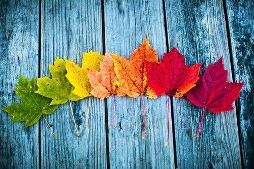 Fall Leaves | autumn chill | Pinterest