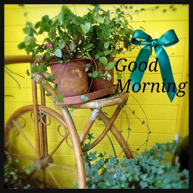 Good Morning Everyone Cute : Cute good morning quotes pinterest