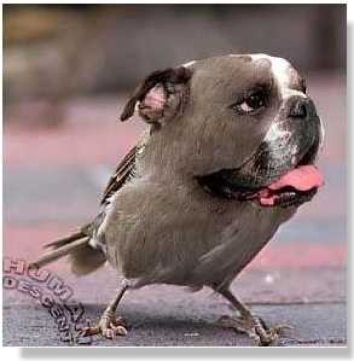 Best Dogging Pics