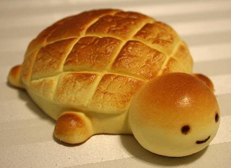 bread turtle! | Turtles! | Pinterest