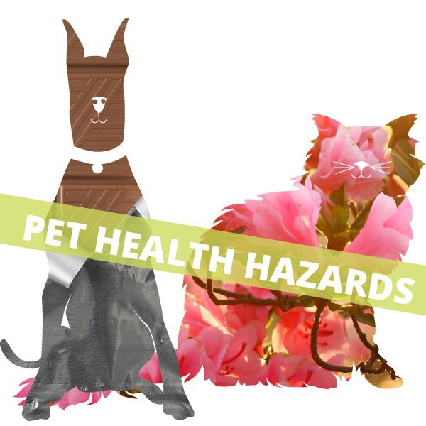 Top 5 Home Health Hazards for Pets