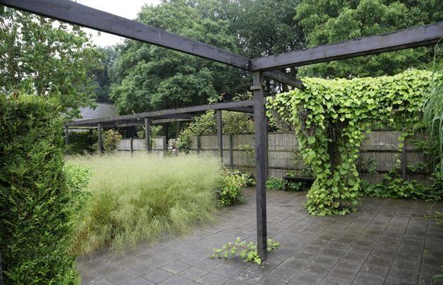 Wild Backyard Ideas : Natural Backyard Landscaping Ideas, Save Money Creating Wildlife Frie