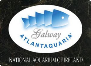 Galway Atlantaquaria North of The Shannon Estuary with Shannon Ferr ...