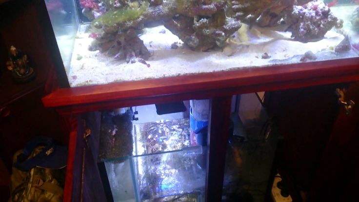 Gas exchange trouble shooting Aquarium Life Pinterest