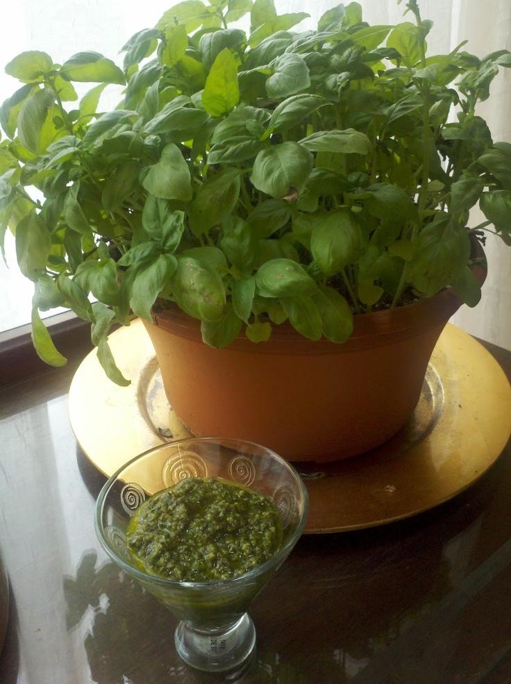Fresh Basil = Fresh Pesto | yummy treats | Pinterest