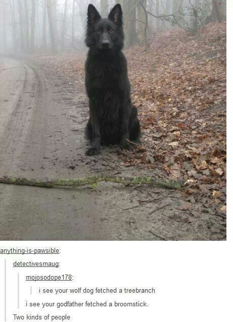 Padfoot! | Funny | Pinterest